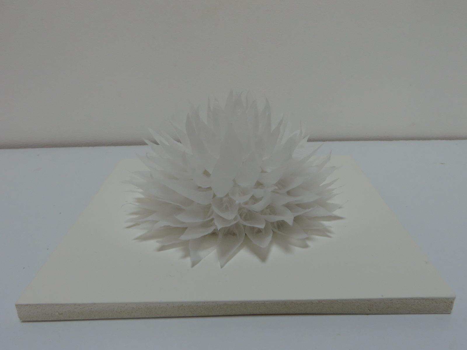 lotus-20-x-20-x-10-cm-copie